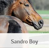 Sandro Boy